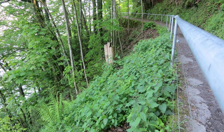 Abb.1: Naturwald-Reservat am Bürgenberg