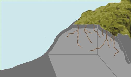Abb. 10: Rhizoide dringen in das Kapillarsystem des Gesteins ein.