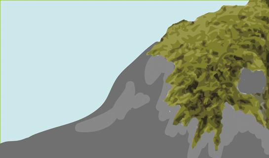 Abb. 9: Moos siedelt sich auf dem Gestein an.