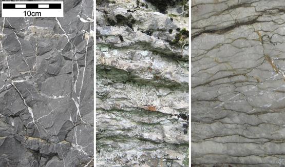 Abb. 1: Kalksteine kommen am Bürgenberg in verschiedensten Variationen vor.