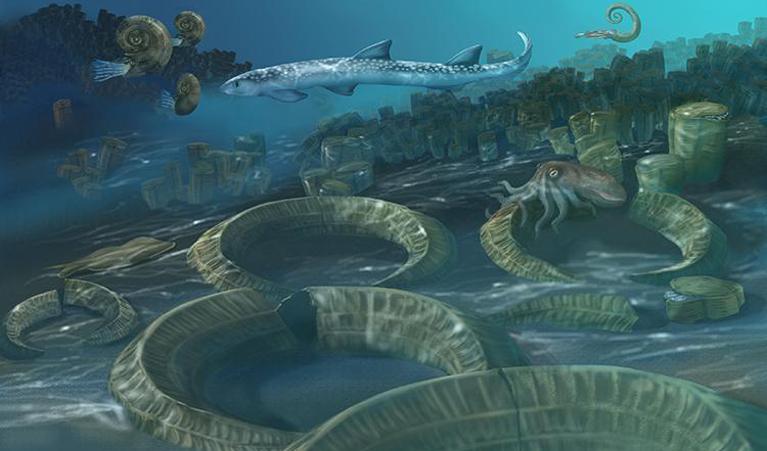 Abb.2: Korallenriff zur Ablagerungszeit der heutigen Schrattenkalk-Formation