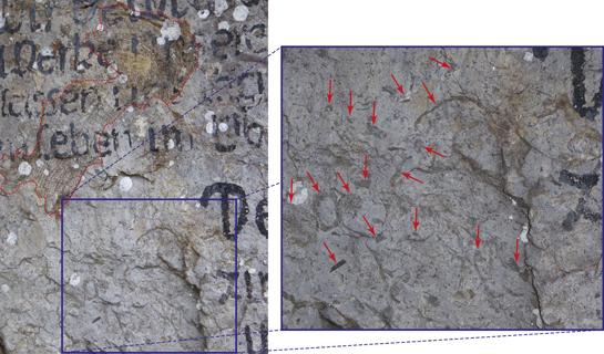 Abb.3: Muschelresten sind vor Ort im Schrattenkalk sichtbar (im Bild mit rot markiert).